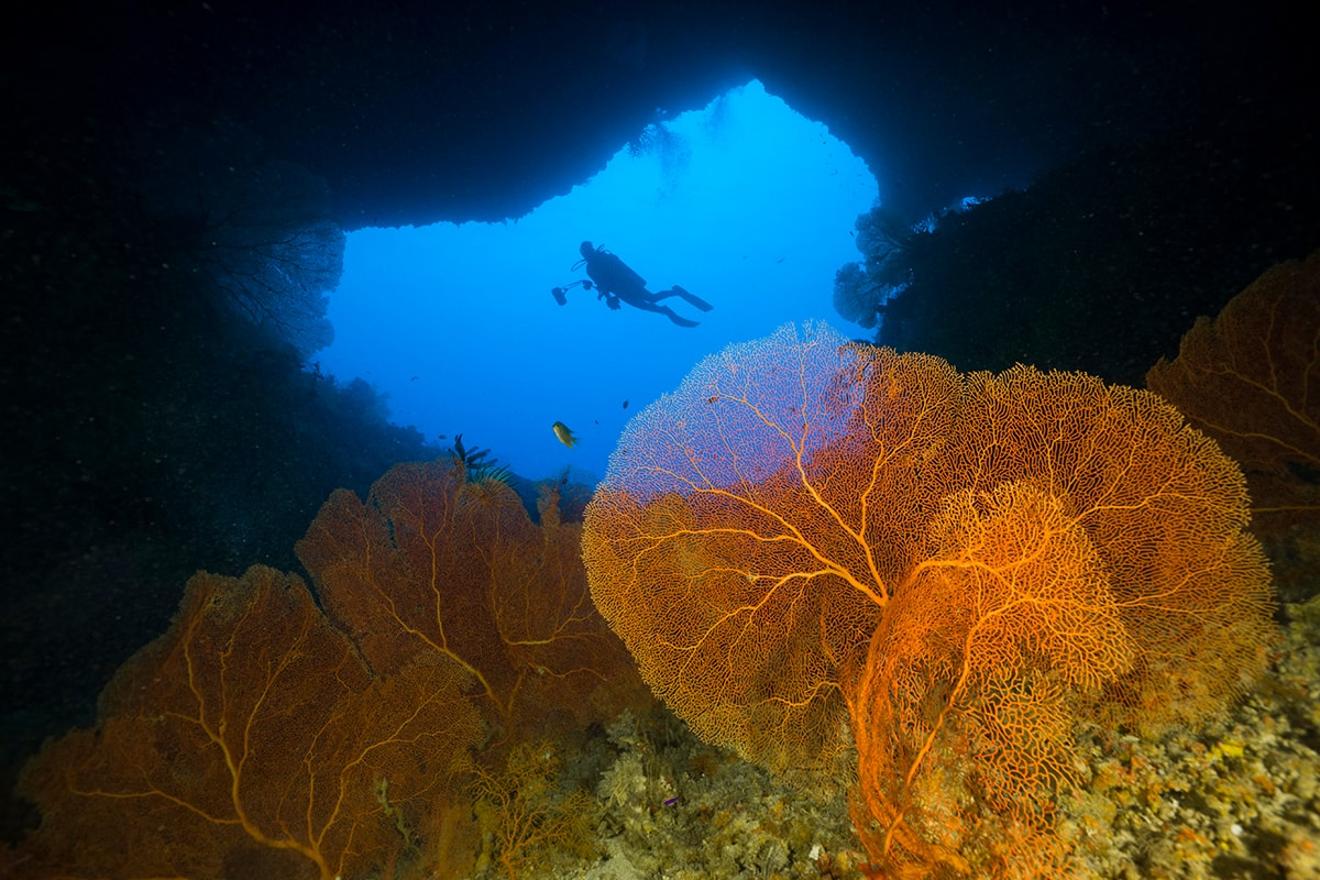 The upper of two openings in the reef wall that connect the Blue Hole caverns of Palau to the open ocean.