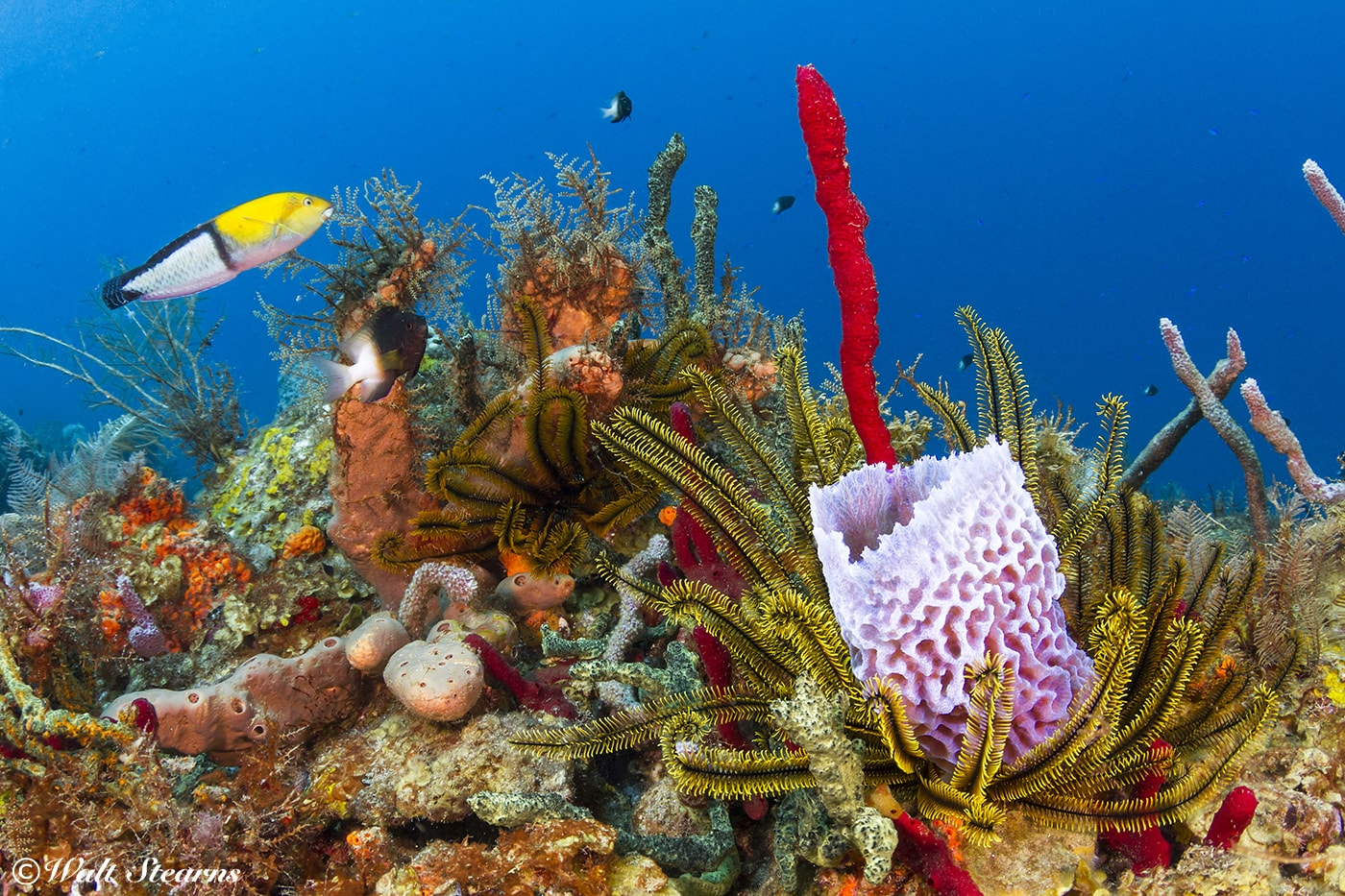 Colorful coral reefs are just a short swim from the beach at BodyHoliday.