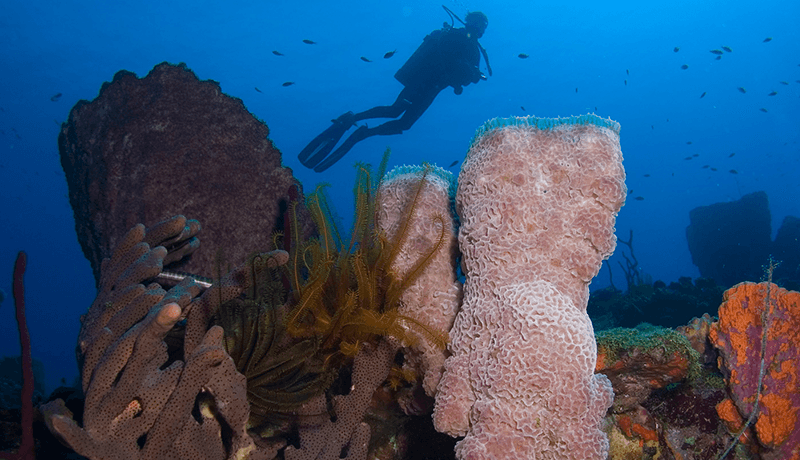 A majority of the vibrant reefs that have made Dominica a favorite with underwater naturalists and photographers suffered little or no damage from the storm.