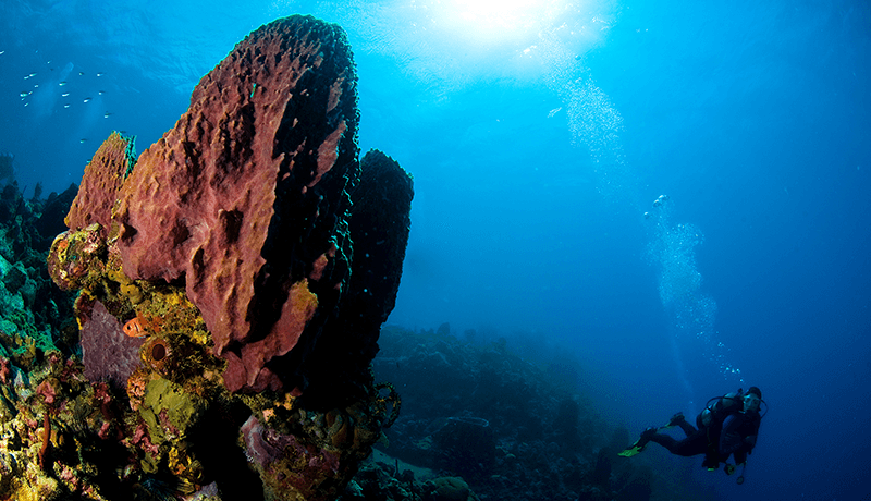 At deeper sites such as Dangleben's Pinnacles large sponges were not affected by the storm surge.