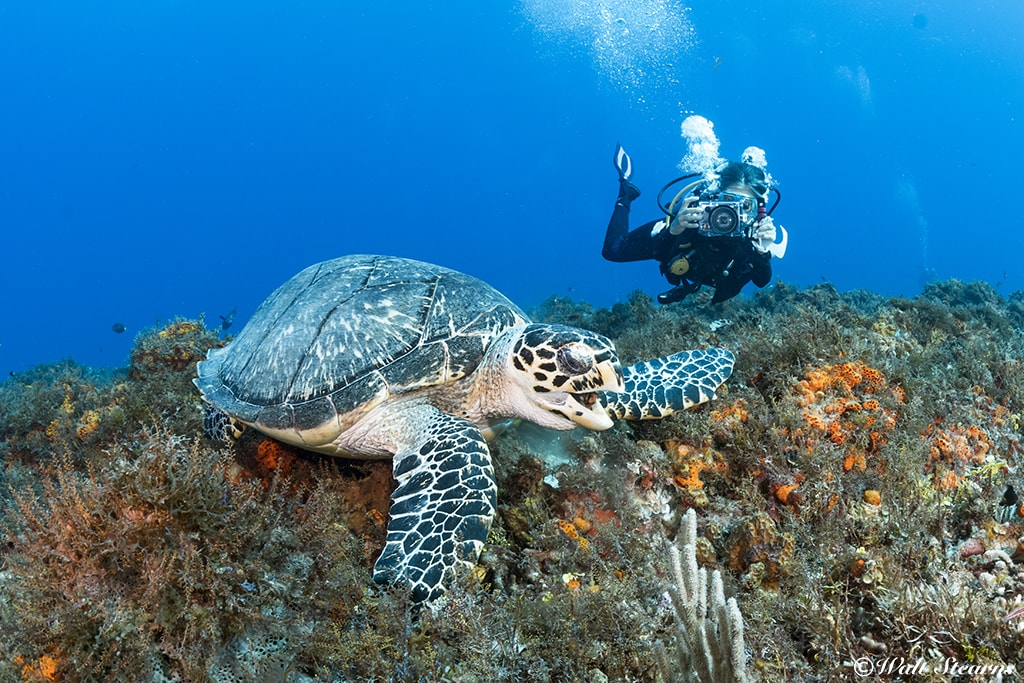 Paradise Reef is a good place to encounter sea turtles.