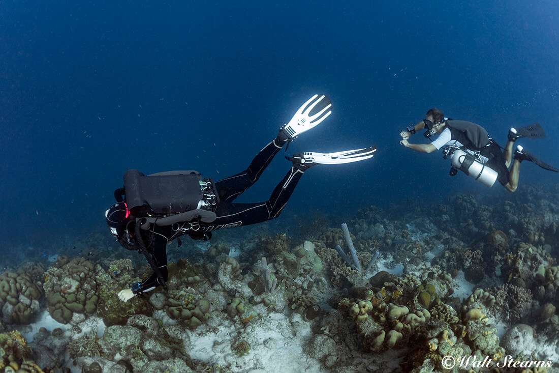 A rebreather diver and a side mount diver cruise the upper crest of Buddy Dive's house reef.