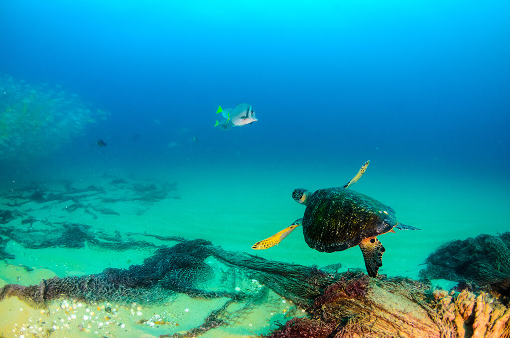 The waters of the Bahia de Loreto National Park are home to a mixture of tropical species and pelagic fish that venture in from the cooler waters of the Pacific Ocean.