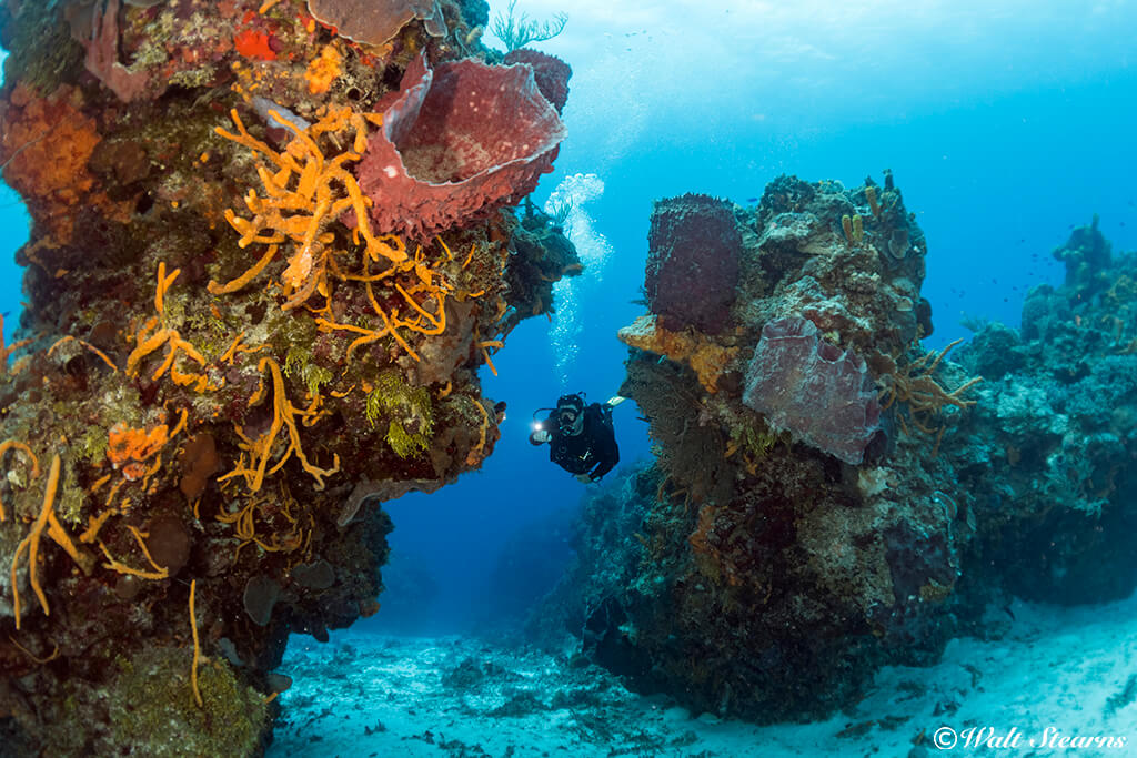 "Good buoyancy control allows you to ""fly"" closer to the dramatic coral formations of Cozumel's Reefs."
