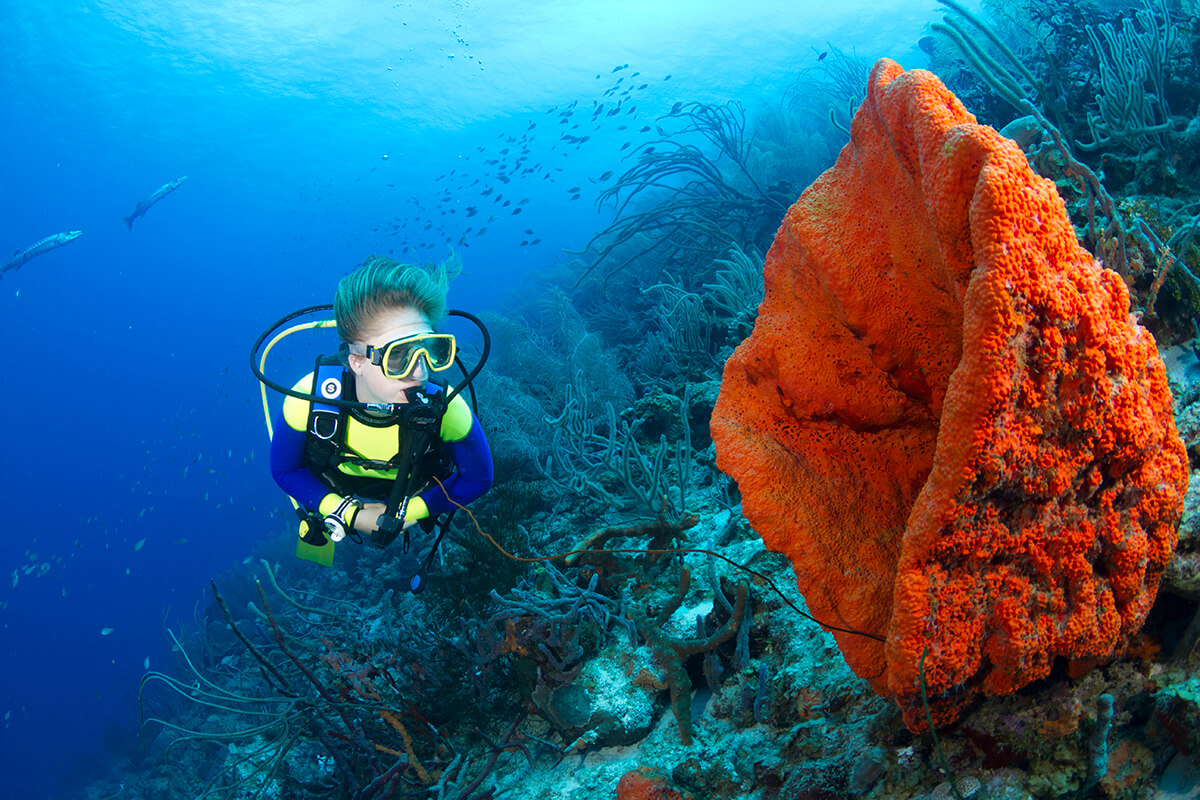 The waters of Curaçao are noted for clear waters and vibrant multi-colored sponge and coral formations.