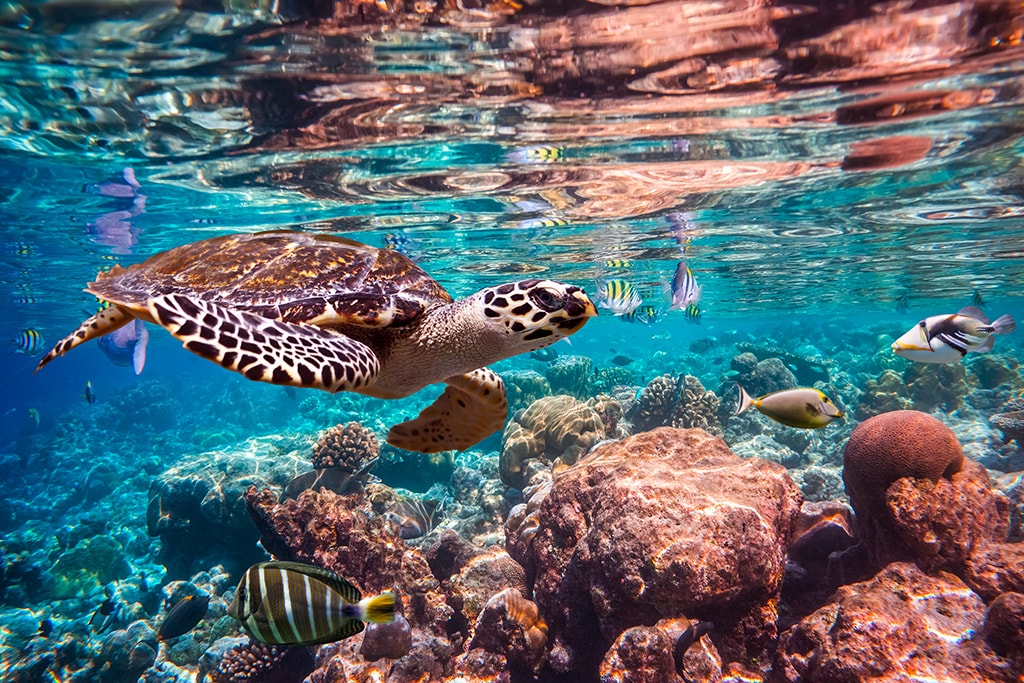 Shallow reefs and coral heads inside atoll lagoons are ideal for snorkeling and relaxing shallow dives.
