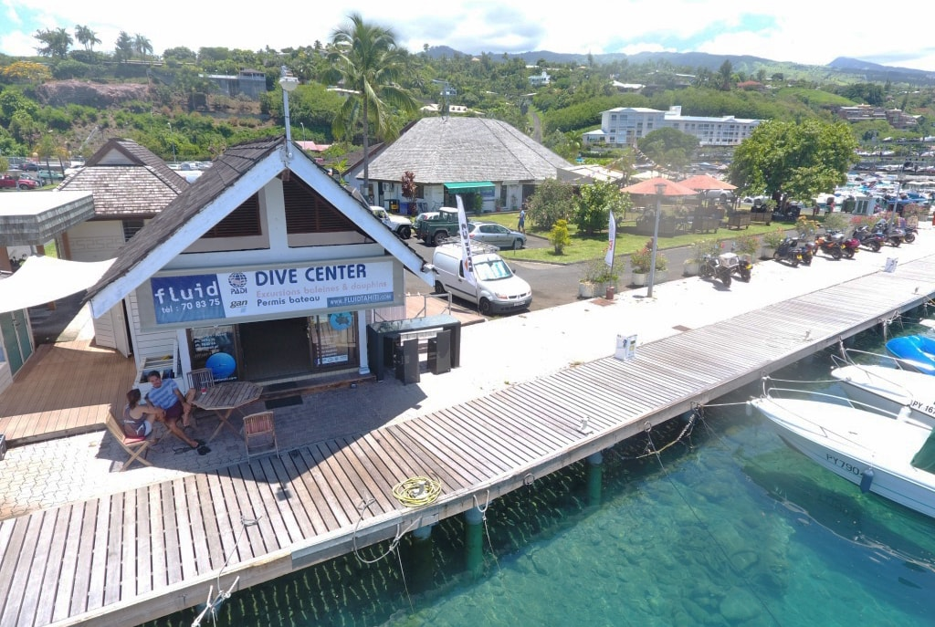 Fluid Dive Center is the starting point for tiger shark encounters and also offers whale and dolphin swims.