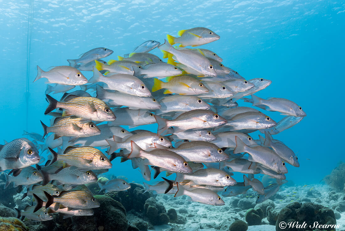 A mixed shoal of fish congregates around a dive boat mooring just off the docks of Captain Don's Habitat.