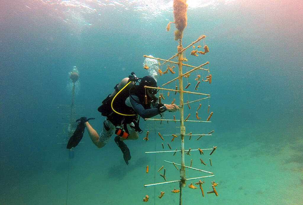 A diver inspects one of the coral trees created by the Subway Watersports team.