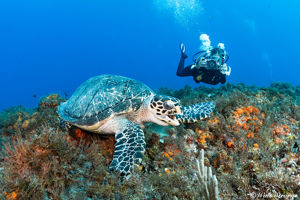 Staying at the front of a dive group may provide additional chances for marine life sightings.