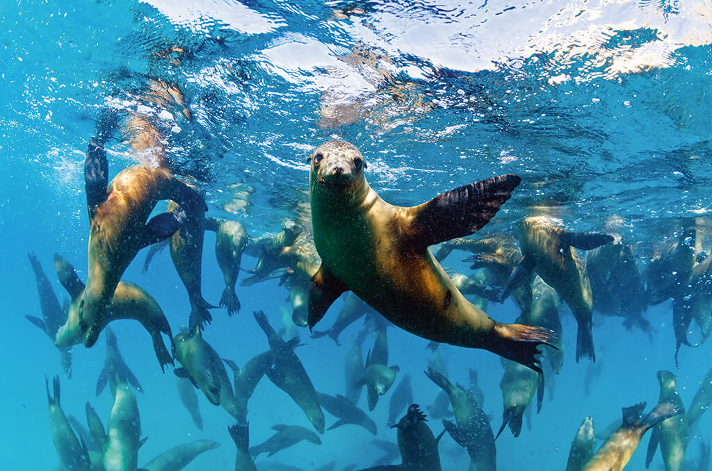 The waters of Loreto are home to pods of playful sea lions.