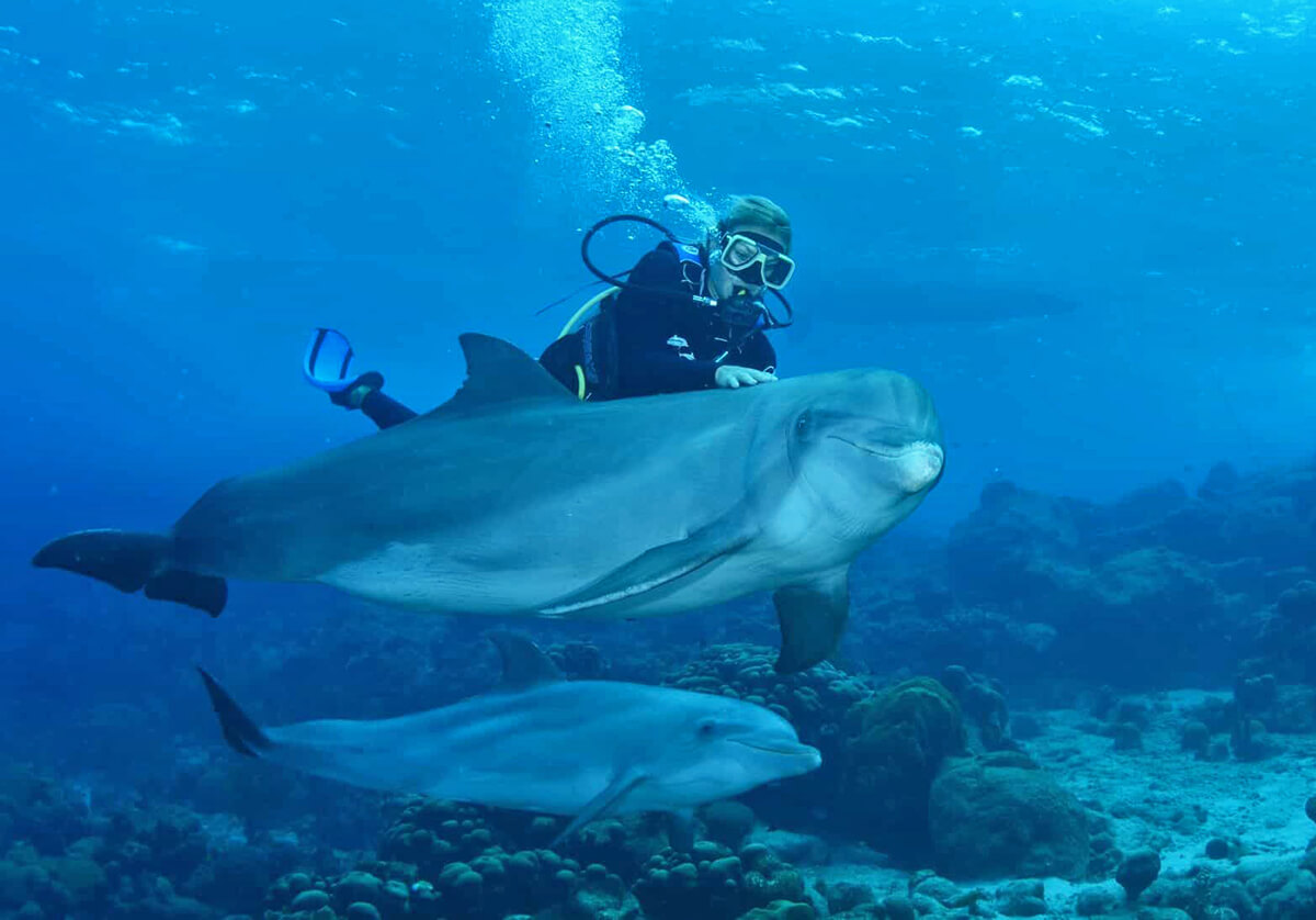 The Open Water Dolphin Dive is one of Ocean Encounters' signature adventures.