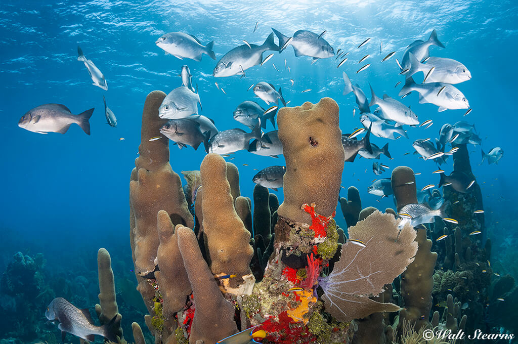 Coral formations create important three-dimensional habitat and shelter for a variety of marine life.