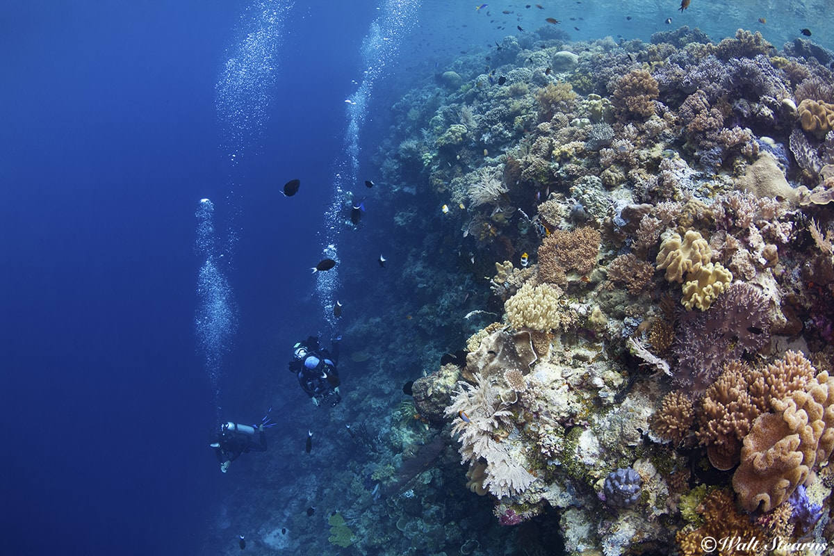 Reef slopes and walls that rise close to the surface create opportunities for multi-level dive profiles.