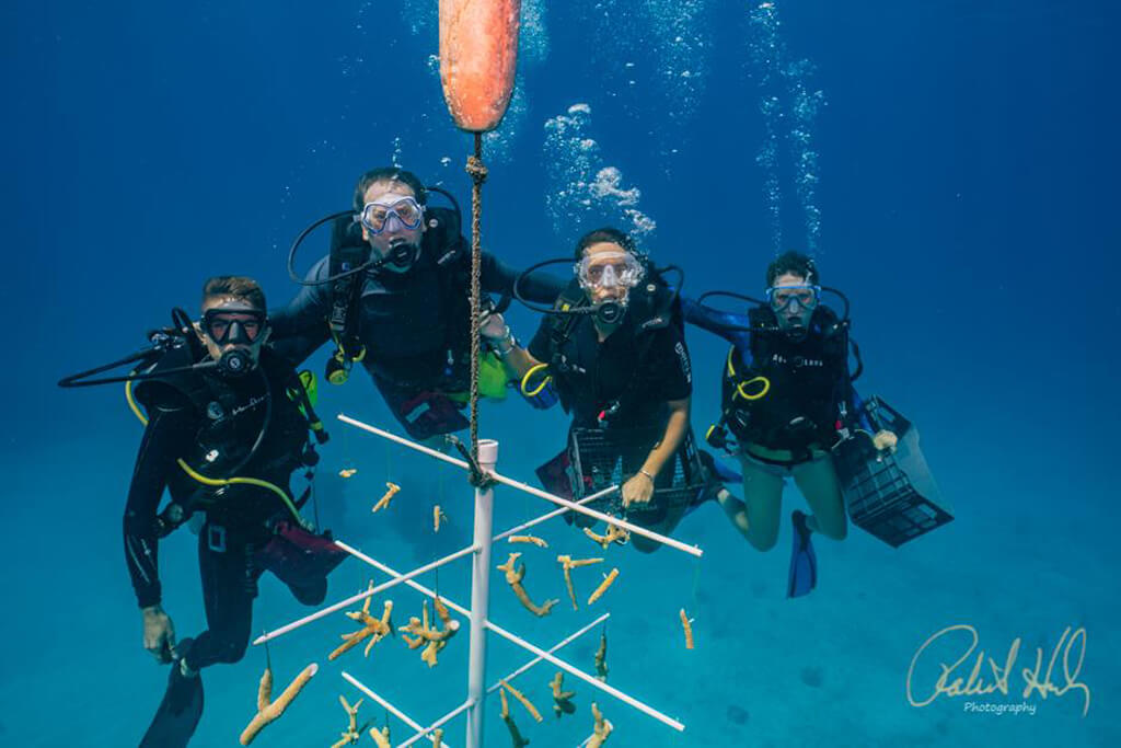 A group of volunteer divers pose at a tree hung with staghorn coral fragments.