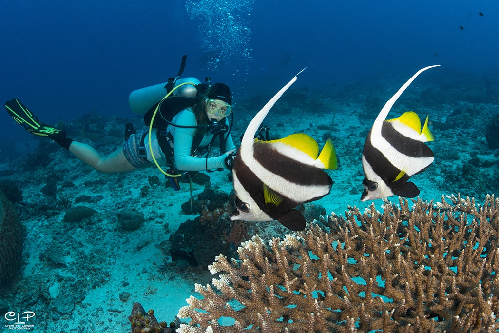 The SeaVentures house reef also takes in natural coral structures and macro-rich habitats.