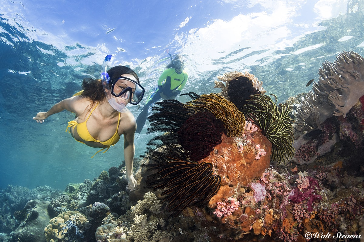 With thousands of acres of shallow reefs to explore, Wakatobi is one of the world's premier snorkeling destinations.