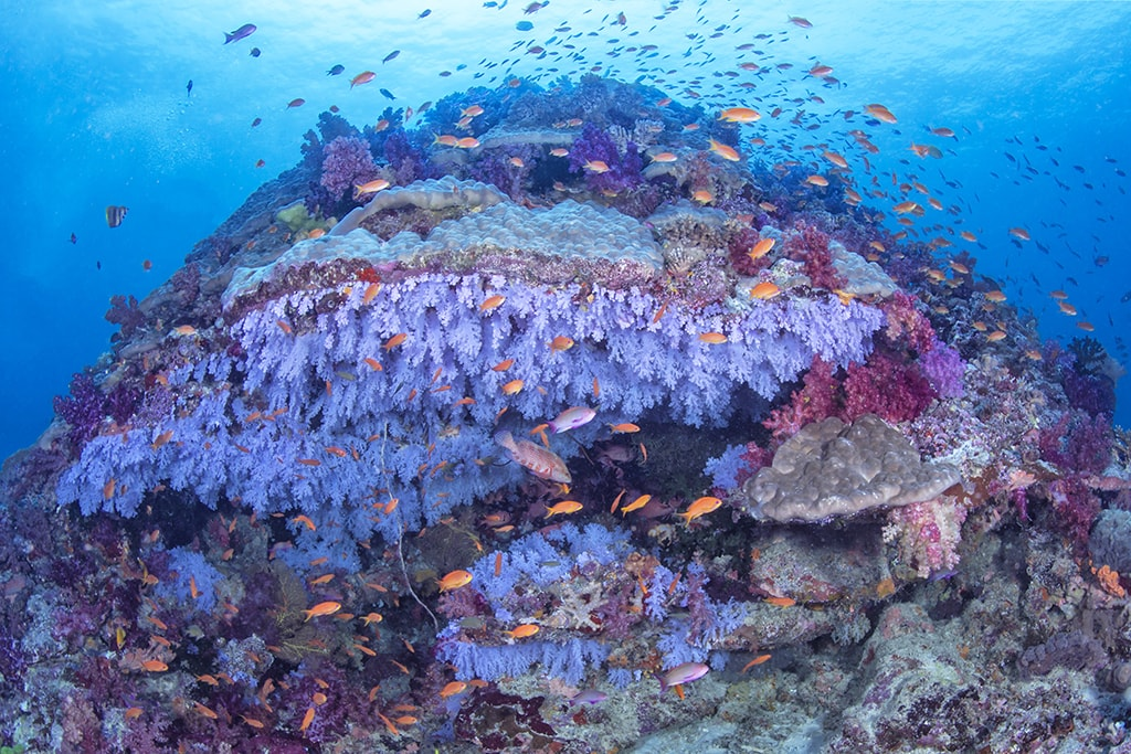 When the currents are running, the dive sites of Rainbow Reef come alive in vivid colors. Photo: Markus Roth.