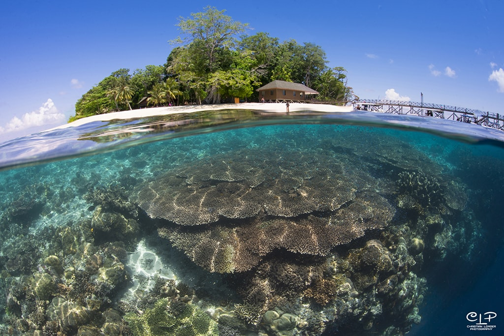 The underwater walls of Sipadan Island start shallow and close to shore.