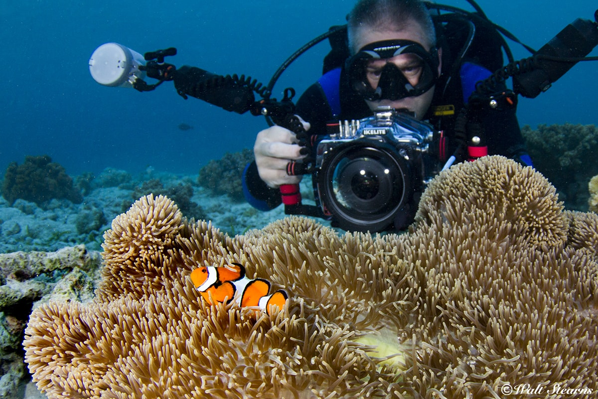 Photographers have an abundance of subjects to enjoy thanks to Wakatobi's conservation initiatives.