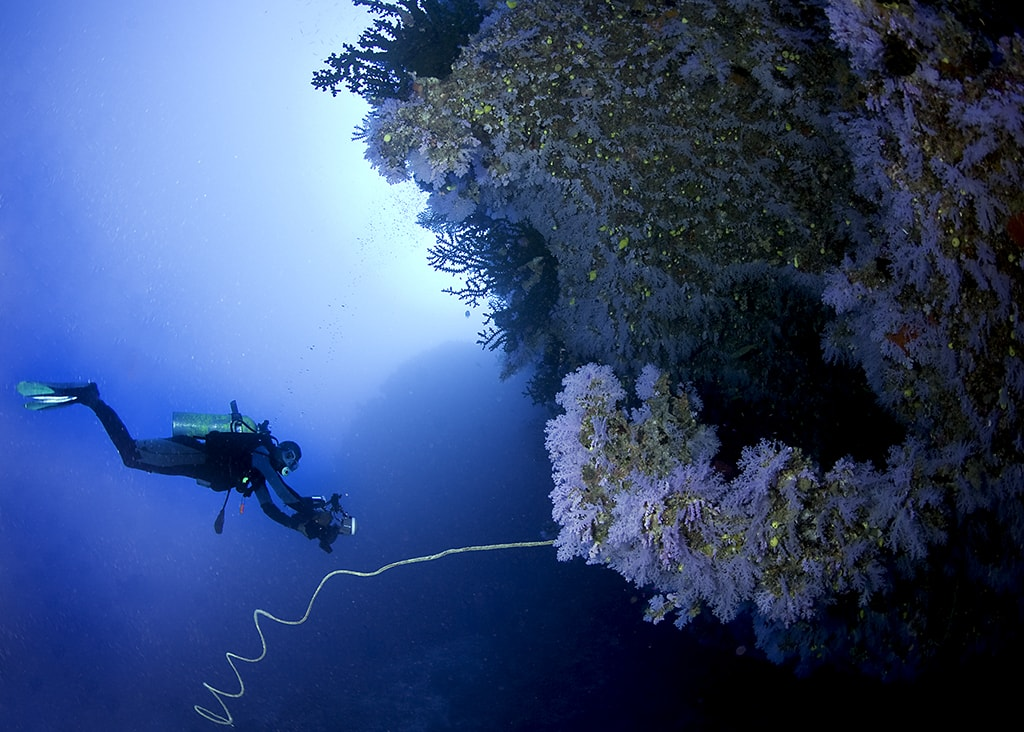 The Great White Wall is one of Fiji's most famous dive sites.