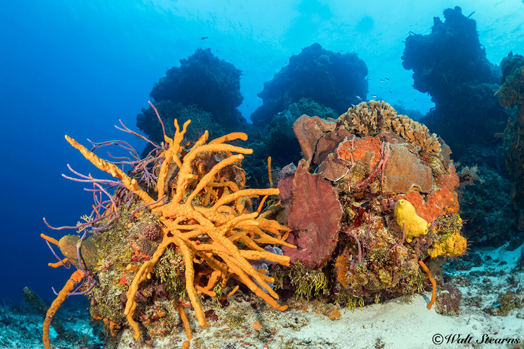 Both Allegro and Occidental are close to Cozumel's most colorful southern reefs.