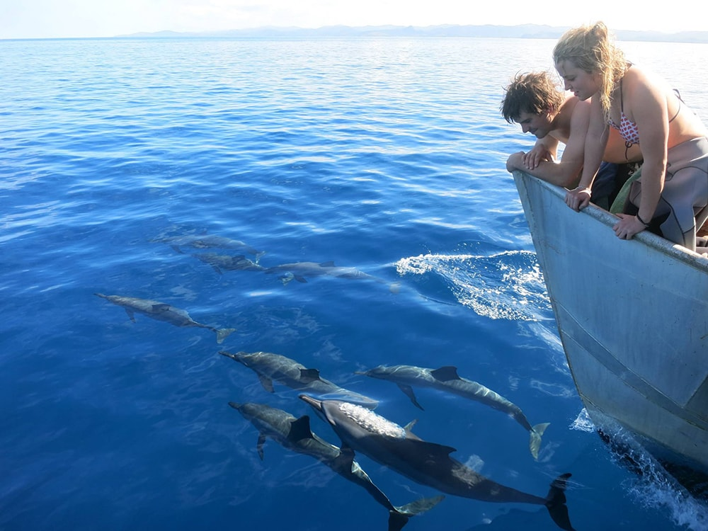 Dolphin watching excursions are among the more popular activities provided by the resort.