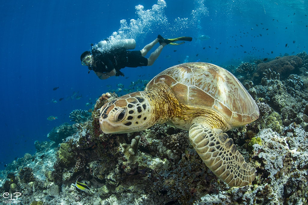 Sipadan is known for its year-round population of sea turtles.