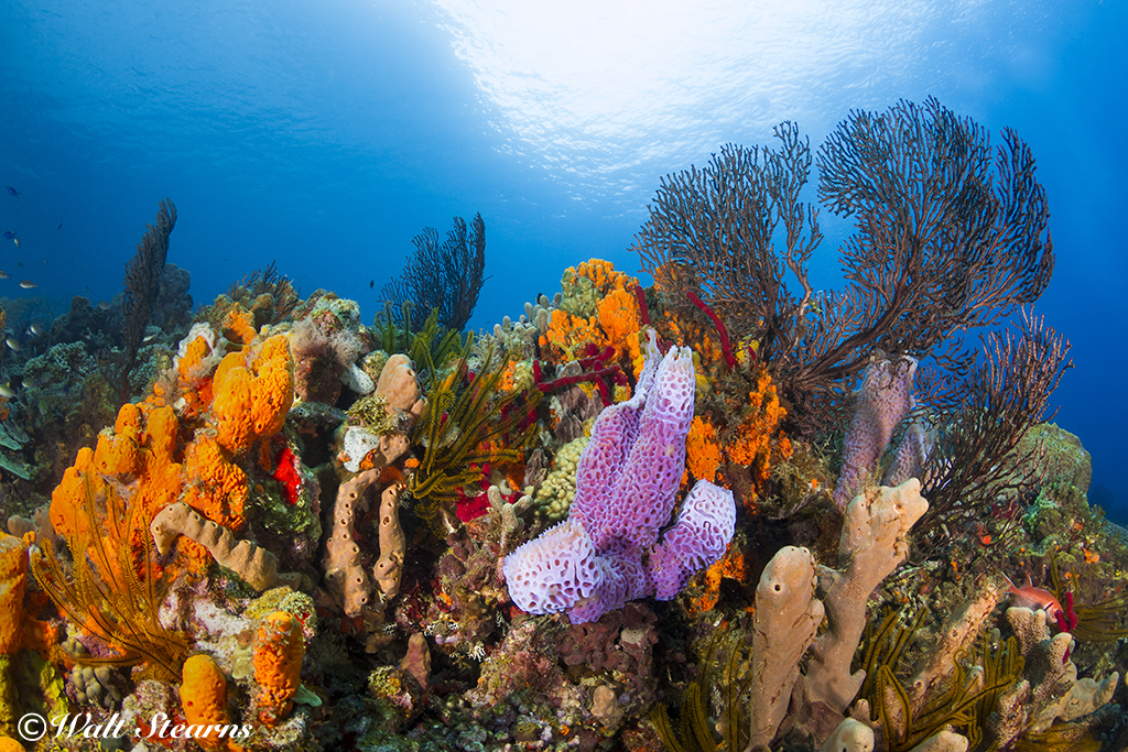 Vibrant reef in St. Lucia