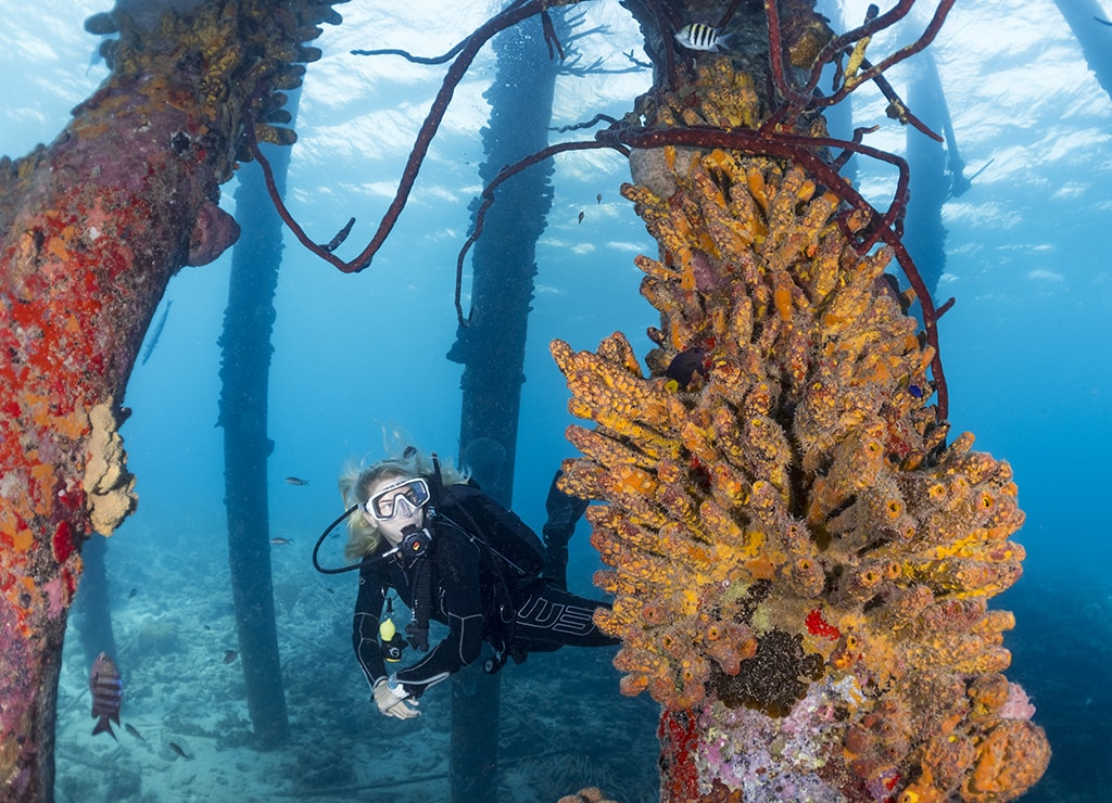 There are 50-plus shore diving sites on Bonaire, including the sponge-encrusted pilings of Salt Pier.