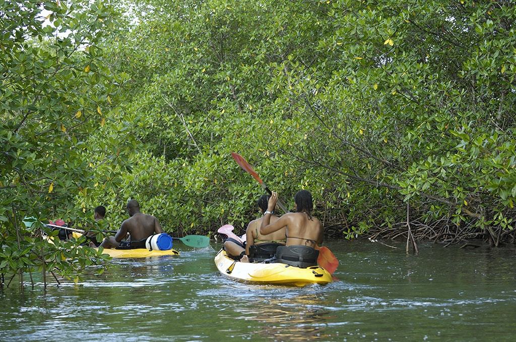 The mangrove channels of the Grand Cul-de-Sac Marine provide kayakers with a watery maze filled with marine and bird life.