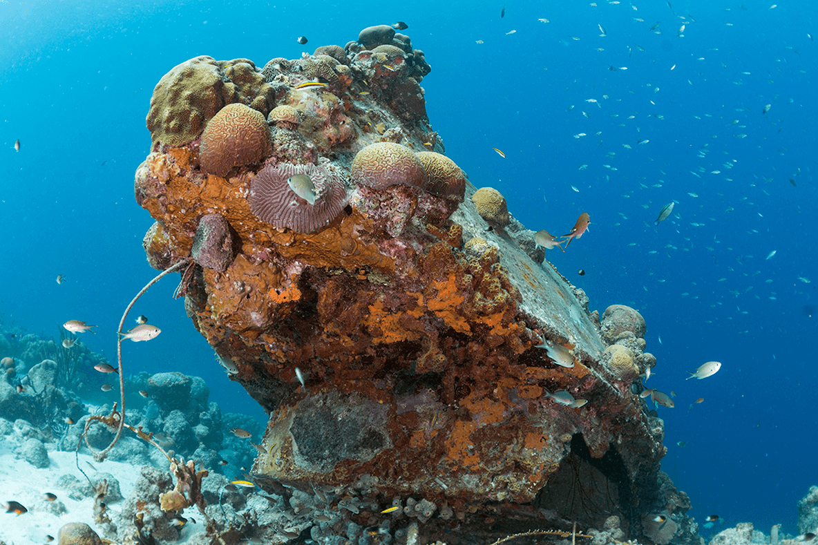 A small wreck on the edge of the reef is now decorated in a colorful coating of coral.