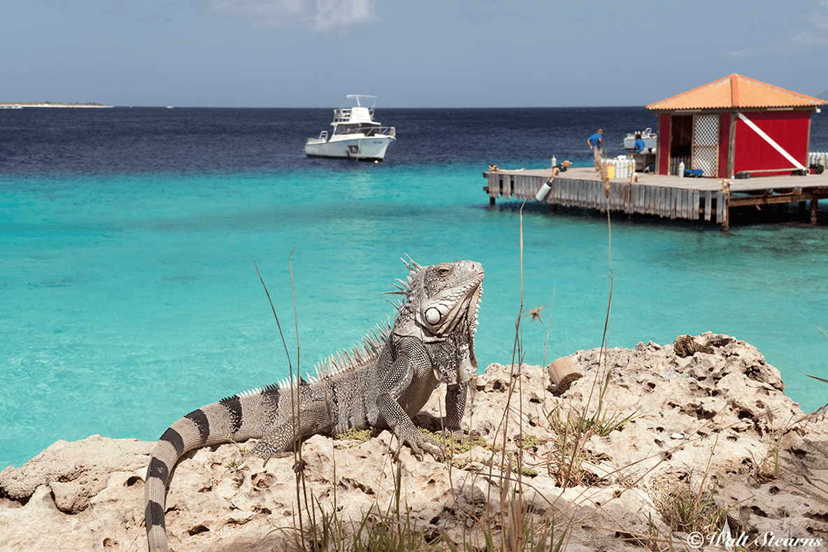 Boat dives leave three times daily from the resort's pier, visiting sites all along Bonaire's west coast.
