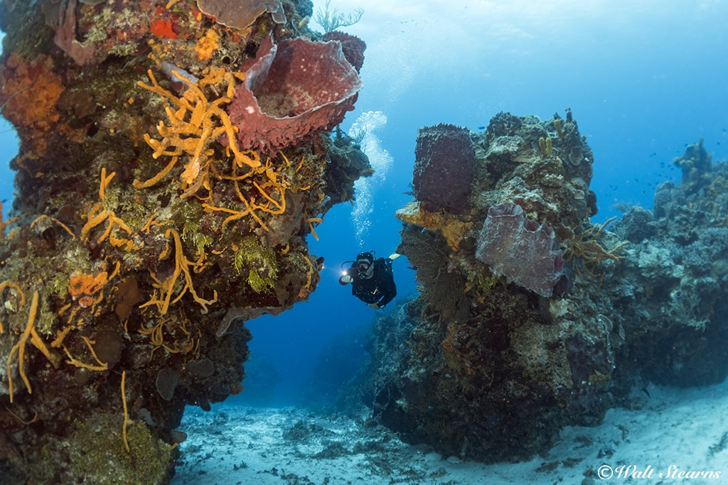 Cozumel's high-profile coral reefs are among the healthiest in the Caribbean.