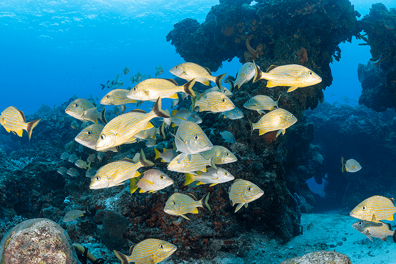 Steady flows of nutrient-rich waters encourage rich sponge growth on the snorkeling reefs of Cozumel.