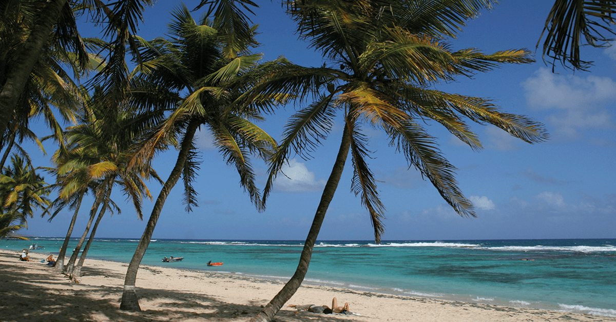 There are plenty of beaches in the Guadeloupe Islands some are lapped by calm waters and lined with beach clubs and boutique hotels, others wild and scenic.