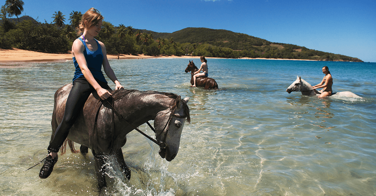 After an exhilarating canter on the beach, both horse and rider can enjoy a refreshing dip in clear Caribbean waters.