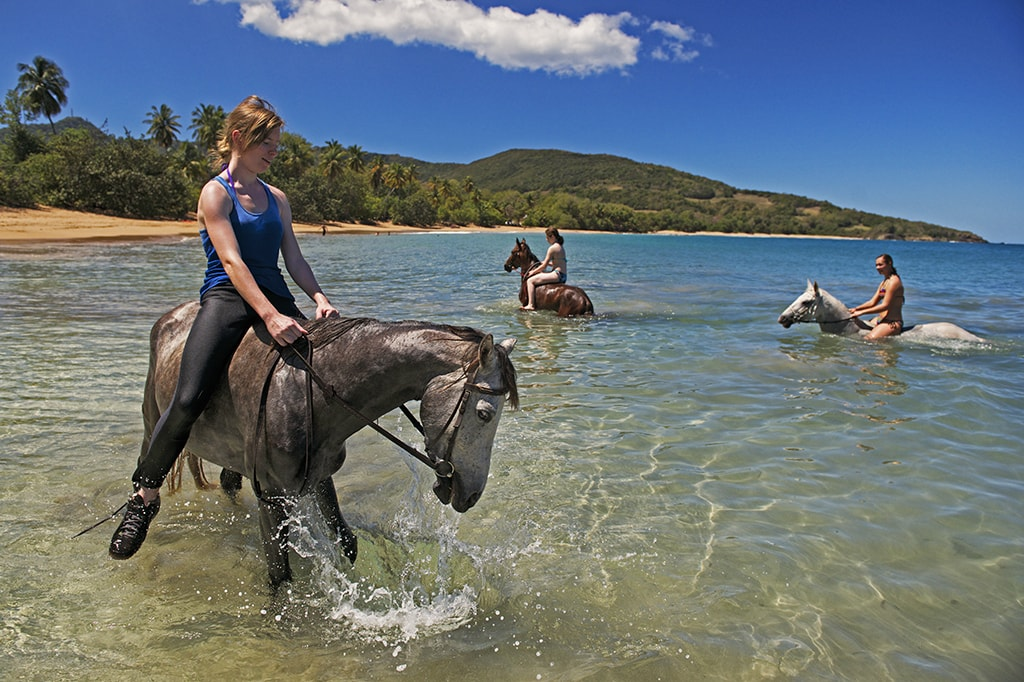 A trail ride in Guadeloupe might end with a horse-and-rider swim in the ocean.
