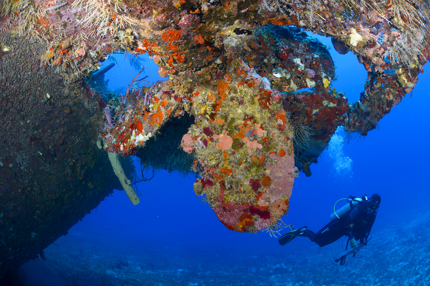 A diver surveys the propeller of the Jado Trader, which is one of Guanaja's signature wreck dives.