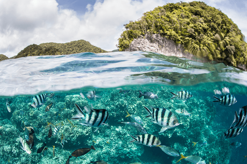 Palau's Rock Islands rise from coral-encrusted shallows. Snorkelers can explore the waters surrounding these iconic formations and also venture to the outer reaches of the fringing barrier reef.