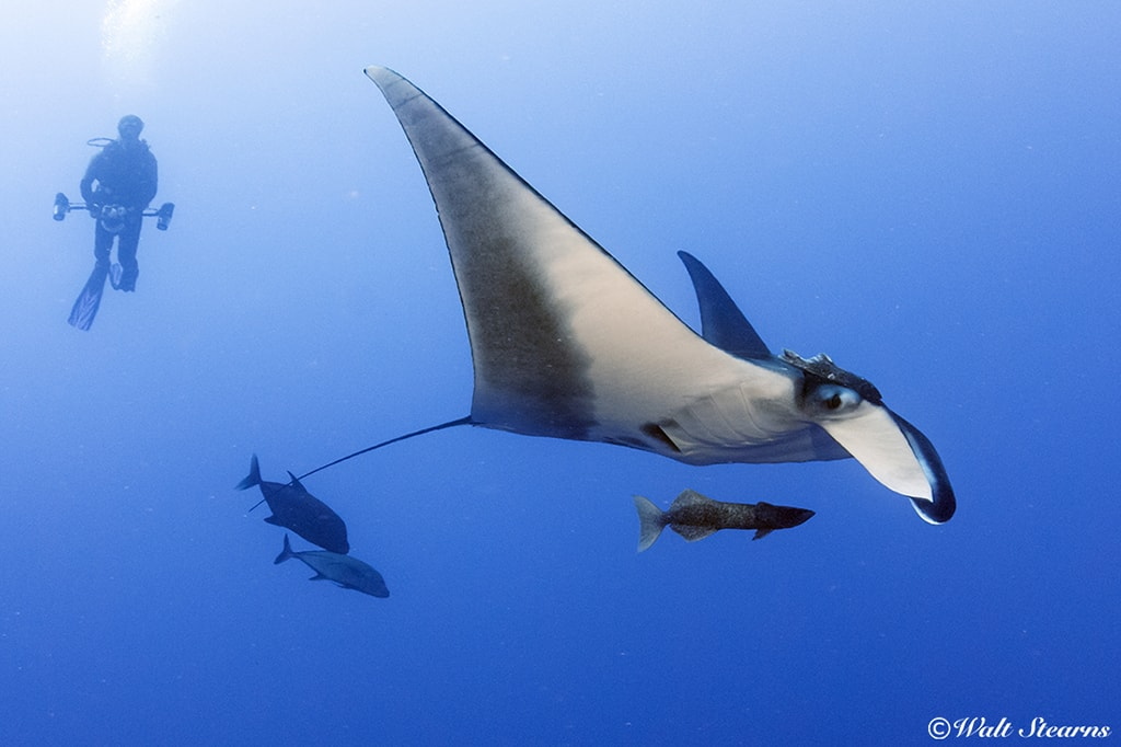 Manta rays are just one of the big-ticket attractions when diving the waters of the Eastern Pacific.