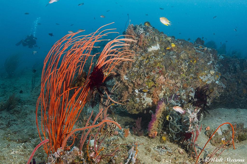 Small rock outcroppings can provide a treasure trove of unique marine life.