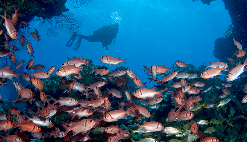 At the swim-through known as Soldierfish Cave, the cavern is packed with a living curtain of black bar soldierfish and grunts.