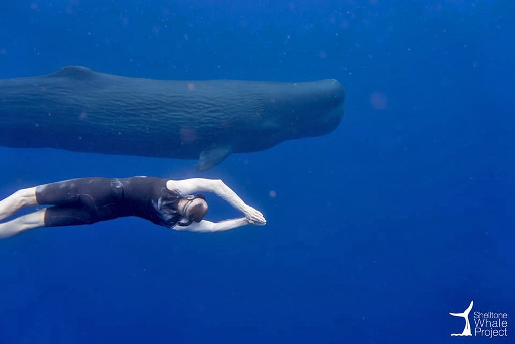 In addition to whale and dolphin watching tours, Guadeloupe offers select opportunities to swim with the whales.