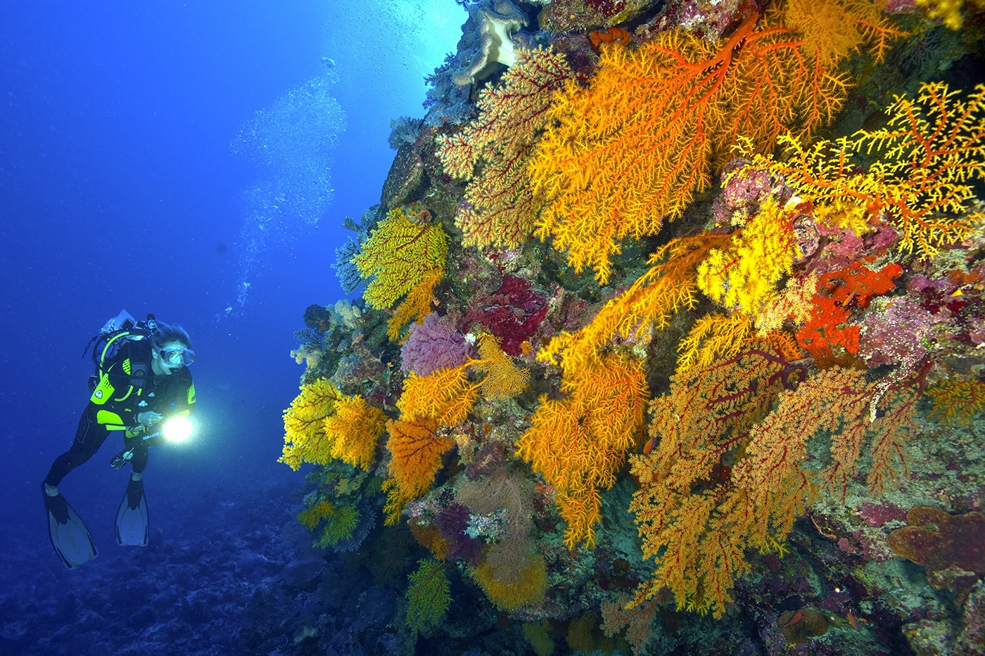 Colorful soft corals cover walls and slopes at many dive sites in the Ribbon Reefs.