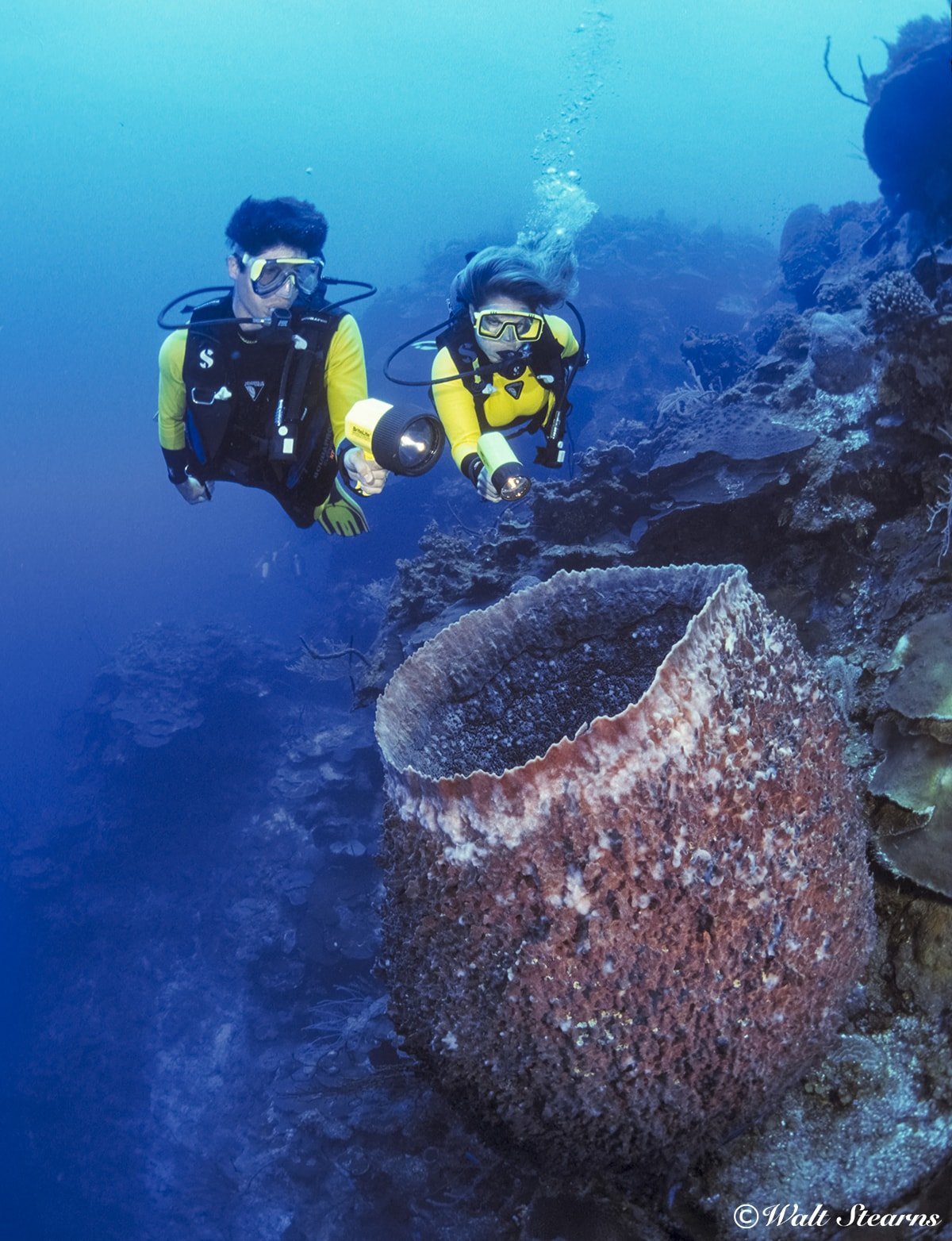 If you come across a large barrel sponge, pause to take a look inside, where you might find anything from a tiny shrimp to a resting moray eel or lobster.