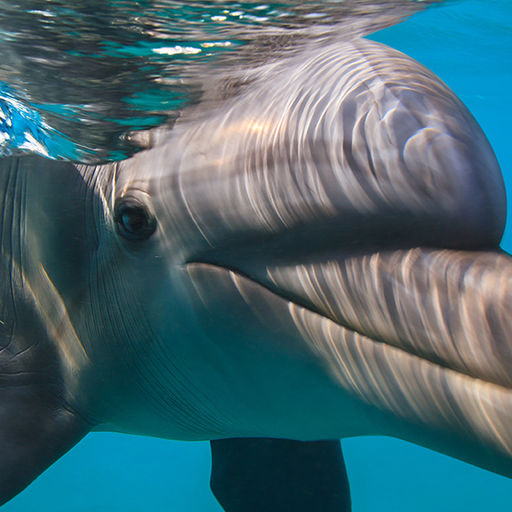 Animals Encounters in the Bahamas