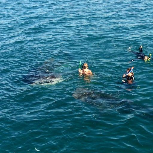 Snorkeling in Baja, Mexico
