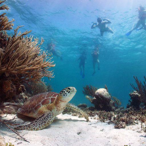 SCUBA diving in Riviera Maya, Mexico