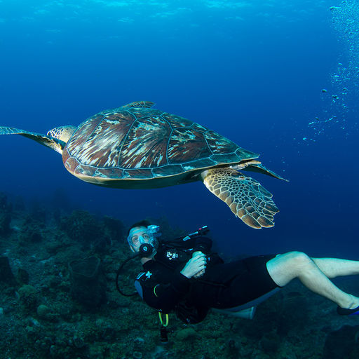 Animal Encounters in St. Lucia